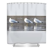 It's Cold - Ice Fishing Anyone Shower Curtain