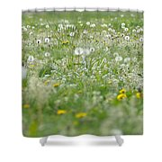 It's Dandelion Time Shower Curtain