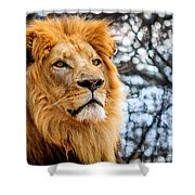 It's Good To Be King Shower Curtain