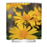 It's Your Day To Shine Shower Curtain