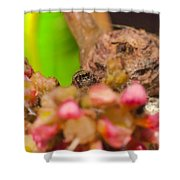 Itsy Bitsy Spider Over Mango  Tree Flowers Shower Curtain