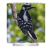 I've Got Your Back - Female Downy Woodpecker Shower Curtain