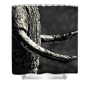 Ivory And Mud Shower Curtain