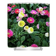 Ivory Tulips And Salmon Daisys Shower Curtain