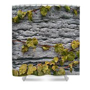 Ivy And Ancient Wall In Old Montreal Hd Photography Shower Curtain