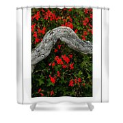 Ivy Geraniums And Log Poster Shower Curtain