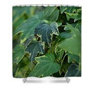Ivy Greens Shower Curtain