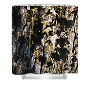 Ivy Leaves Grunge Tone Shower Curtain