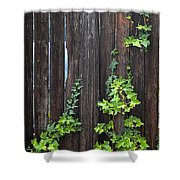 Ivy On Fence Shower Curtain