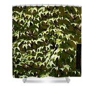 Ivy Sunlight Shower Curtain