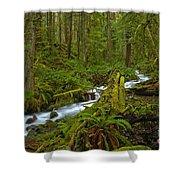 Lifeblood Of The Rainforest Shower Curtain