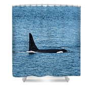 J27 Blackberry Shower Curtain