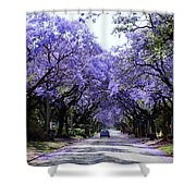 Jacarandas In Pretoria Shower Curtain