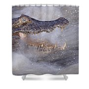 Jacare Caiman Fishing Shower Curtain