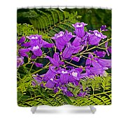 Jacarunda On Corrientes Avenue In Buenos Aires-argentina  Shower Curtain