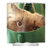 Jack In The Bag Shower Curtain