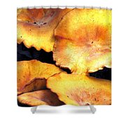 Jack O Lantern Mushrooms Shower Curtain