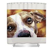 Jack Russel Terrier Shower Curtain