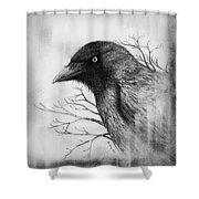 Jackdaw At My Window Shower Curtain