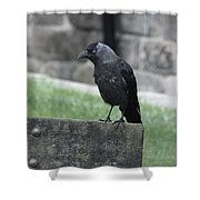 Jackdaw - Stare Shower Curtain