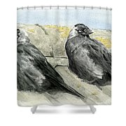 Jackdaws In The Sun Shower Curtain