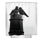 Jackdaws Together Shower Curtain