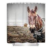 Jacketed Horse Shower Curtain
