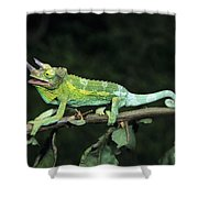 Jacksons Chameleon On Branch Shower Curtain by Dave Fleetham - Printscapes