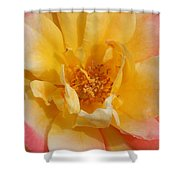 Jacob's Bands Of Color Shower Curtain