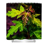 Jagged Leaves Shower Curtain