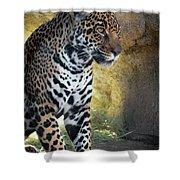 Jaguar At Rest Shower Curtain