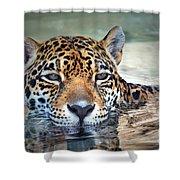 Jaguar Cooldown Shower Curtain