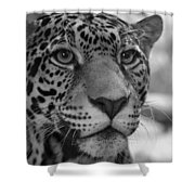 Jaguar In Black And White Shower Curtain