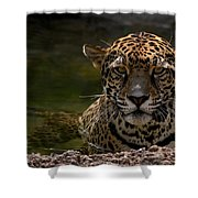Jaguar In The Water Shower Curtain by Sandy Keeton