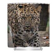 Jaguar On The Prowl Shower Curtain