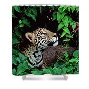 Jaguar Panthera Onca Peeking Shower Curtain