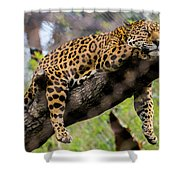 Jaguar Relaxation Shower Curtain