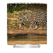 Jaguar Walking Beside River In Dappled Sunlight Shower Curtain