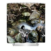 Jam At The Creek 2018 #1 Shower Curtain