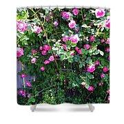 Jane's Rose Bush Shower Curtain