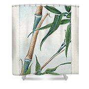 Japan: Bamboo, C1870s Shower Curtain