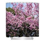 Japan Blossoms Shower Curtain