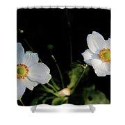 Japanese Anemone Flower Shower Curtain