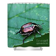 Japanese Beetle Shower Curtain