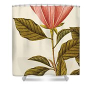 Japanese Bigleaf Magnolia Shower Curtain