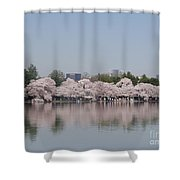 Japanese Cherry Blossom Trees Shower Curtain