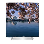 Japanese Cherry Blossoms Prunus Shower Curtain