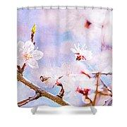 Japanese Cherry - Sakura In Bloom Shower Curtain