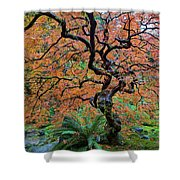 Japanese Garden Lace Leaf Maple Tree In Fall Shower Curtain
