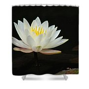 Japanese Garden Lily  Shower Curtain by Ward Photography